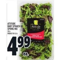 Attitude Baby Spinach Or Spring Mix